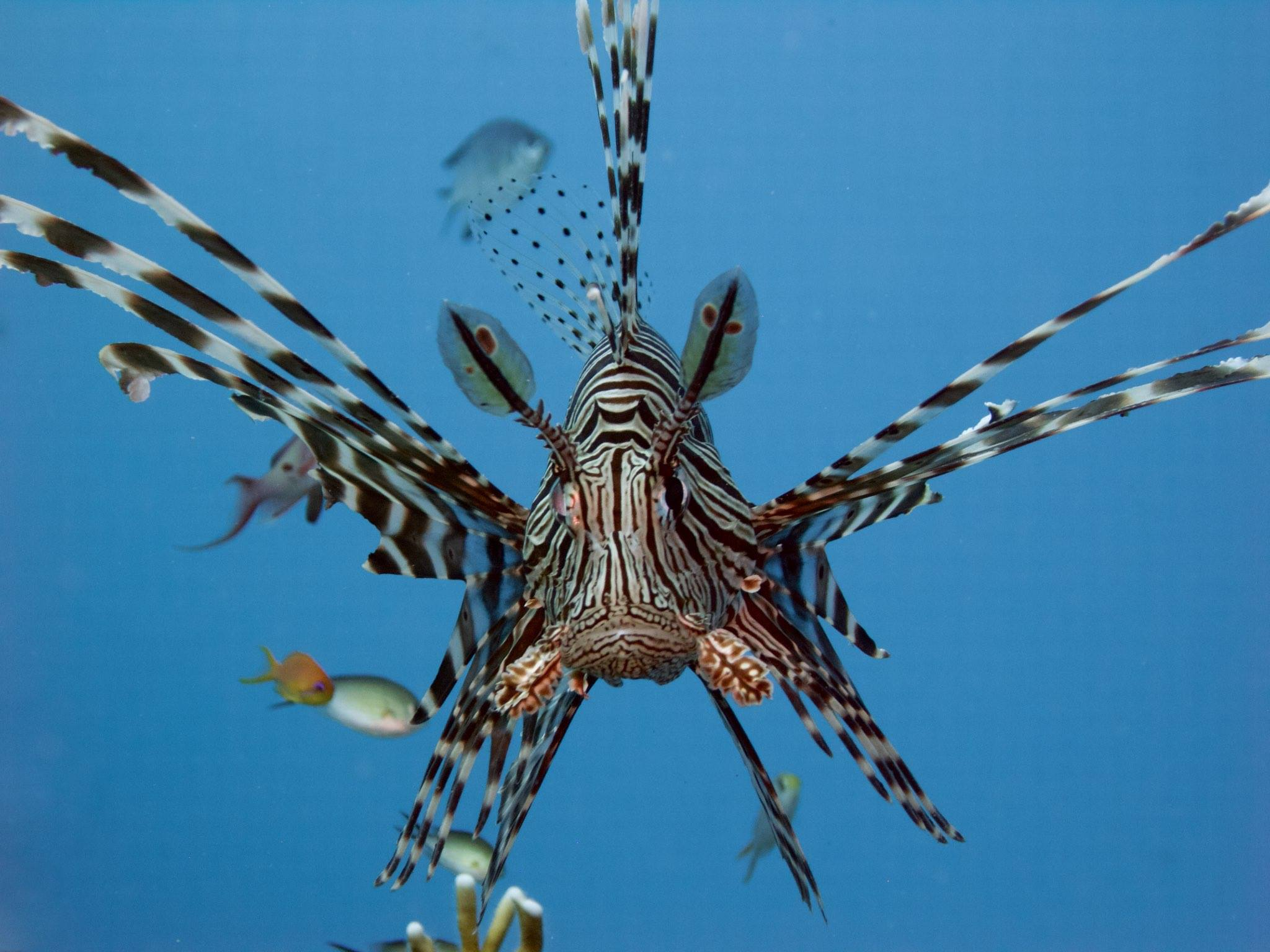 Education and conservationlionfish