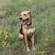 Wildflower Pup