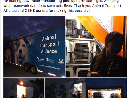 Large-Scale Animal Transports Sound Good, But, Do They Help, and Are They Legal?