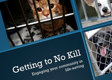 Engaging the Community in No Kill Discussions Can Smash Through Obstacles to Success