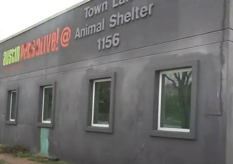 Why Austin Pets Alive! Supports Abusive Animal Shelters