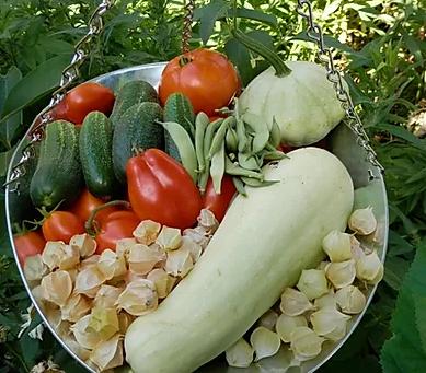 Registration for 2020 Veggie Basics Class Now Open