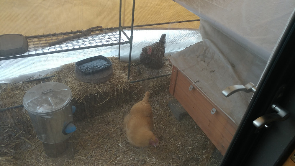 A chicken coop in a greenhouse attached to the house.