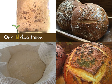 Free Online Sourdough Bread Making Class Announced