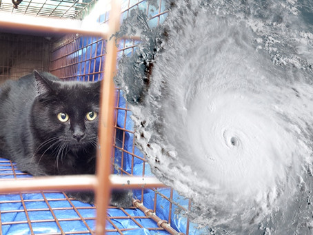As Hurricane Irma Slams Florida, People Are Still Trying to Figure Out What is Happening to Pets in
