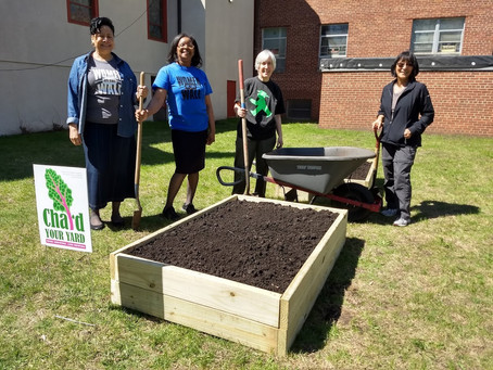 Chard Your Yard IS Happening This Year and in Need of Volunteers