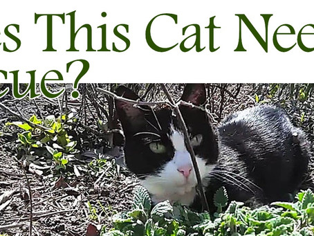 Free Download: Does This Cat Need Rescue?