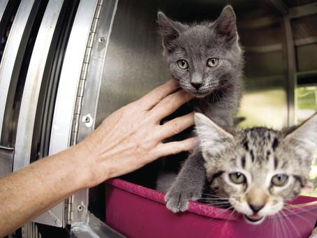 Pueblo, Colorado City Councilman Condemns Firing of Volunteer by Pueblo Animal Services for Writing
