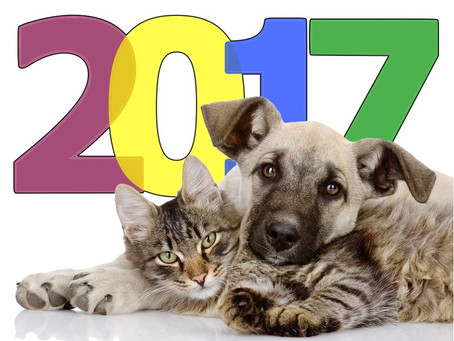 2017: A Year of Stunning Successes and Irreconcilable Differences in Animal Shelters