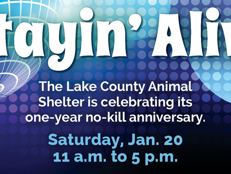 Celebrations and Lessons Learned from the First Year of No Kill in Lake County, Florida