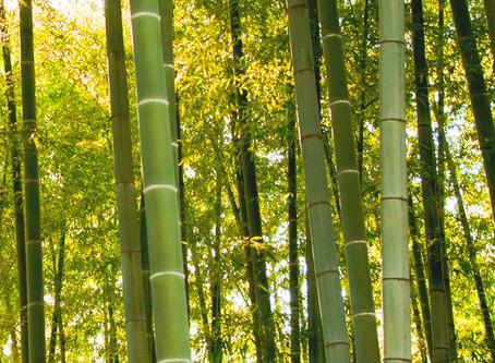 Bamboo, Because We Give a Crap