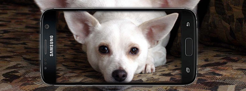 Dog being photographed with a smart phone