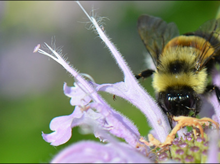 Applications for Native Pollinator Gardens Being Accepted