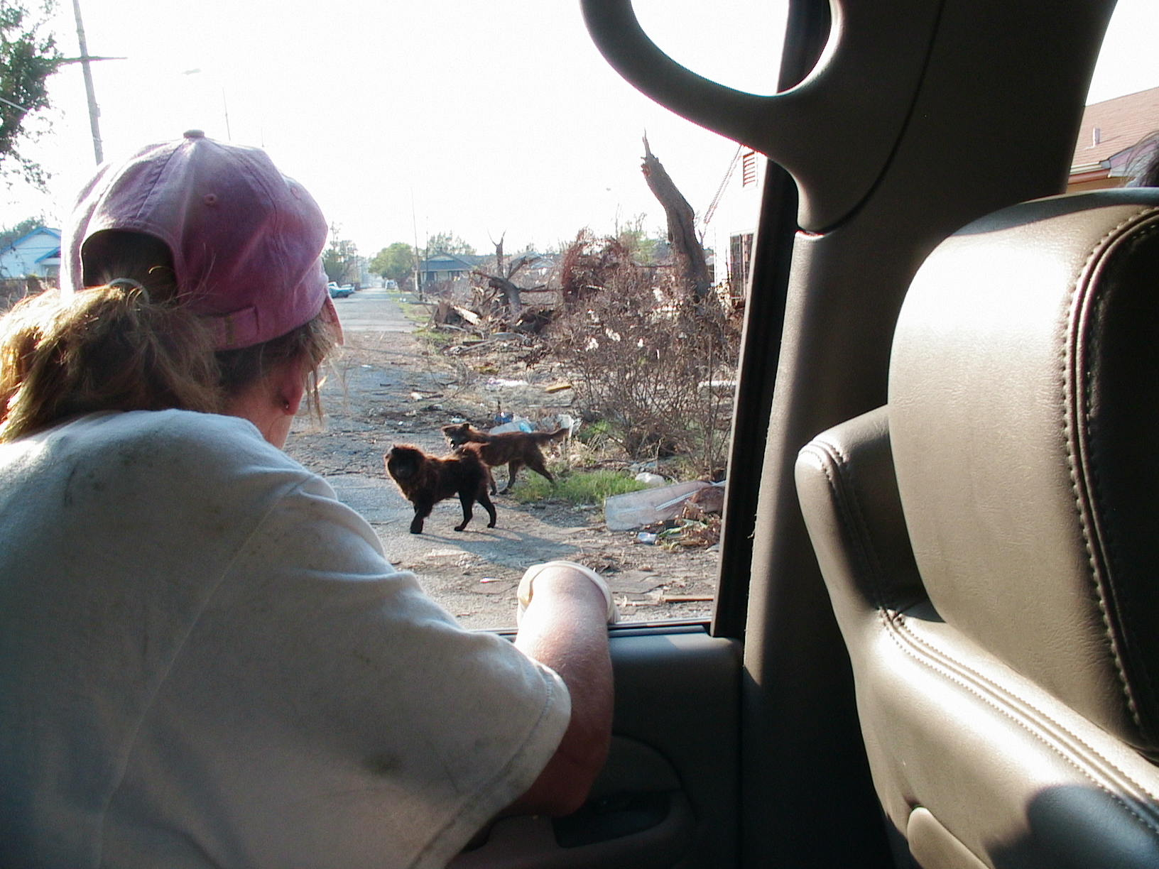 """Once the waters retreated, along with most of the """"rescue agencies"""" the numbers of free-roaming dogs was unimaginable."""