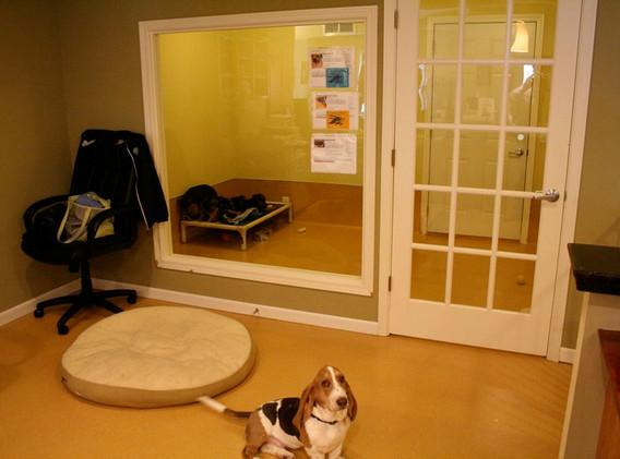 Luxury Pet Housing