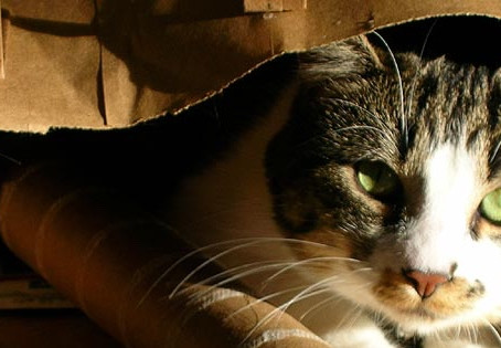 The Cat is Out of the Bag: No Kill Pretenders Signs of No Kill Progress