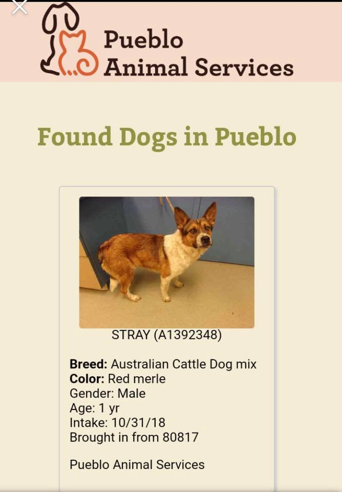 "One of several dogs killed by Humane Society of Pikes Peak Region for ""behavior"" leading up to the crucial vote by Pueblo City Council regarding who will run Pueblo Animal Services in the future."