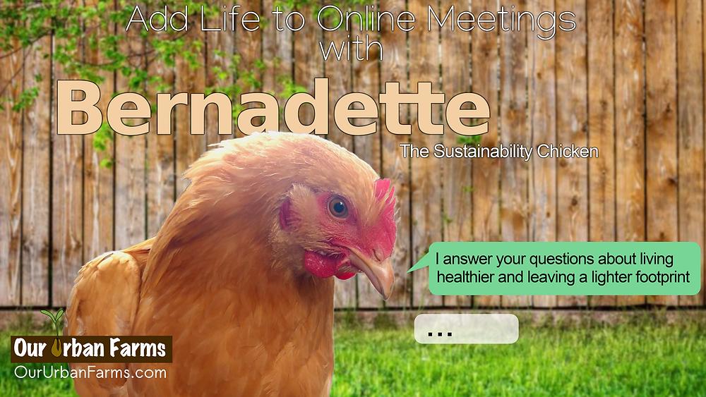 Bernadette, the sustainability chicken