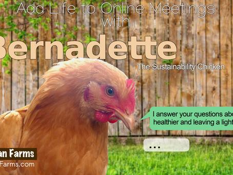 Bernadette the Sustainability Chicken