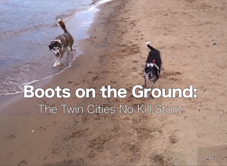 Tonight is the night! Boots on the Ground: The Twin Cities No Kill Story Premiere
