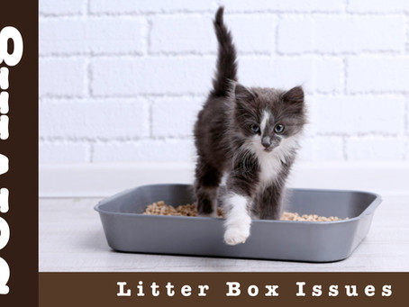 Solving Litter Box Issues
