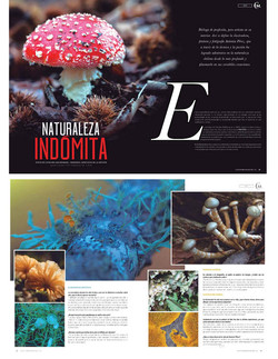 Revista Costa Magazine