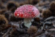 fotografía hongos