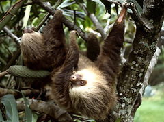 Sloth taken on one of our Costa Rica nature tour.