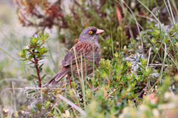 Volcano Junco, Costa Rica by Paco Madrigal