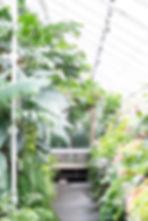 plants window edits before.jpg