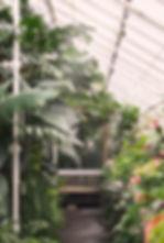 plants window after by Paula.jpg