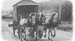 camptown-harness-wagon.jpg