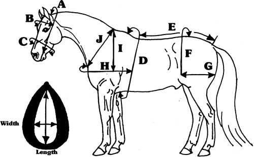 harnessmeasure.jpg