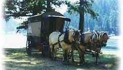 camptown-harness-wagon-2.jpg