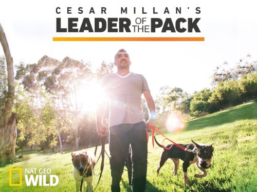 The lider of the pack