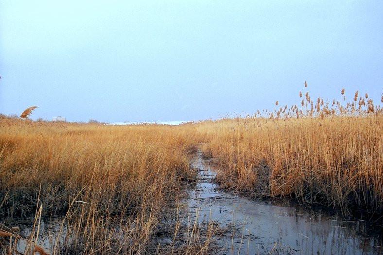Meadowlands in Lyndhurst