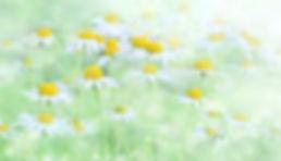 nature-3054797_1920.jpg