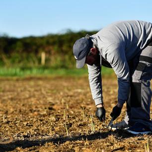 Les agriculteurs québécois réclament une aide d'urgence