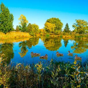 Brossard adopte son Plan d'action en environnement