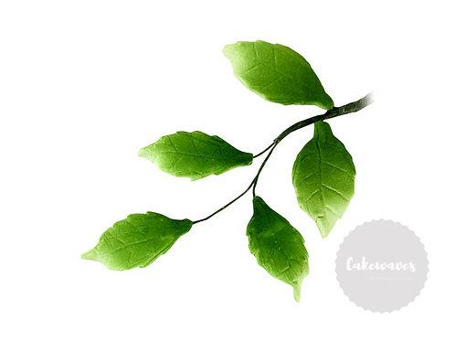 5 Rose leaves Spray Filler 4cm x 10cm