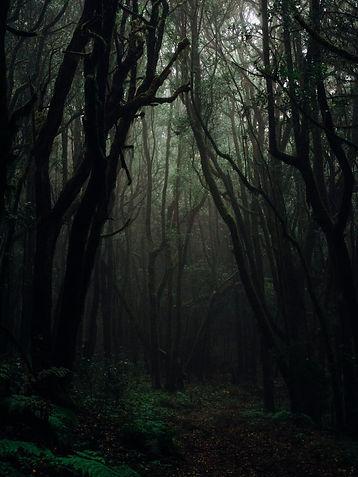 dark, gloomy forest