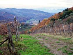 dicomano-hillside