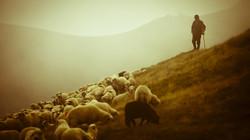 pecorepascolo