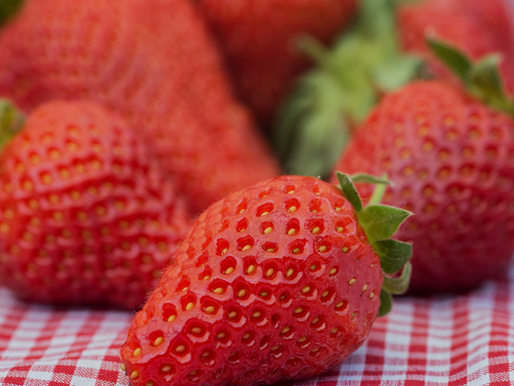 PYO Strawberries Kick Off - July 6