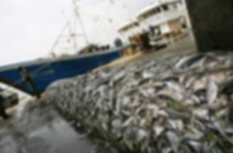 Protest world fishing day.JPG