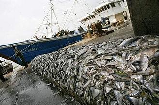 Protest world fishing day.JPG