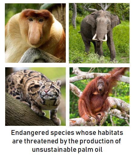 Endangered species with habitats threatened by unsustainable palm oil