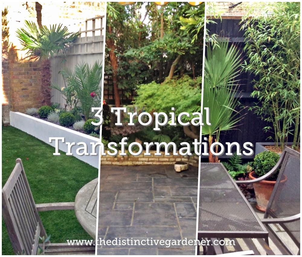 3 tropical garden transformations by the Distinctive Gardener
