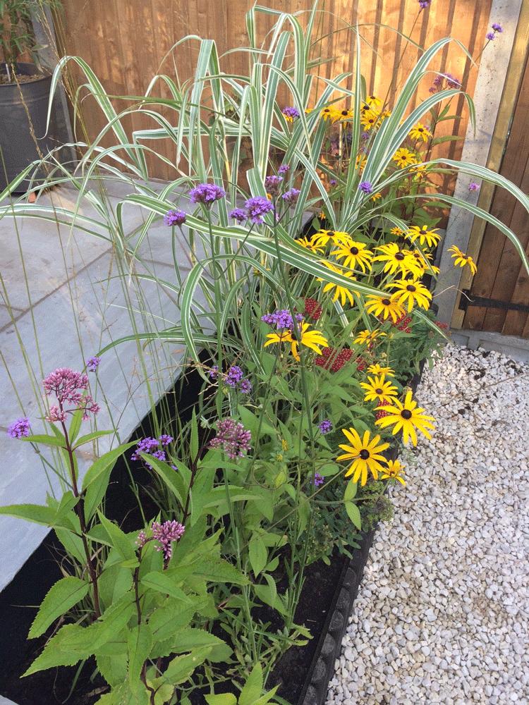 Terrace border planting