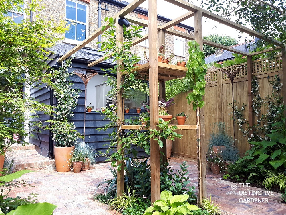 Courtyard garden with pergola